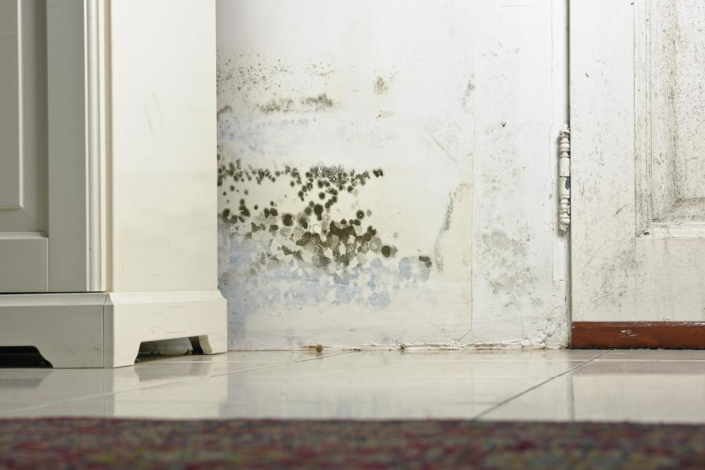 como limpiar el moho de las paredes
